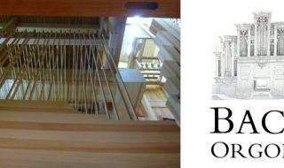 Bach orgona